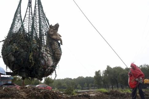China_Dead_Pigs.JPEG-024d4